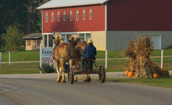 Farm-amish-working-farm